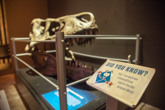 Where Chicago - Field Museum (Leilani B'Smith Photography)-6207